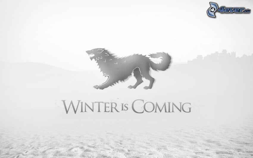 Winter is coming, lobo, invierno