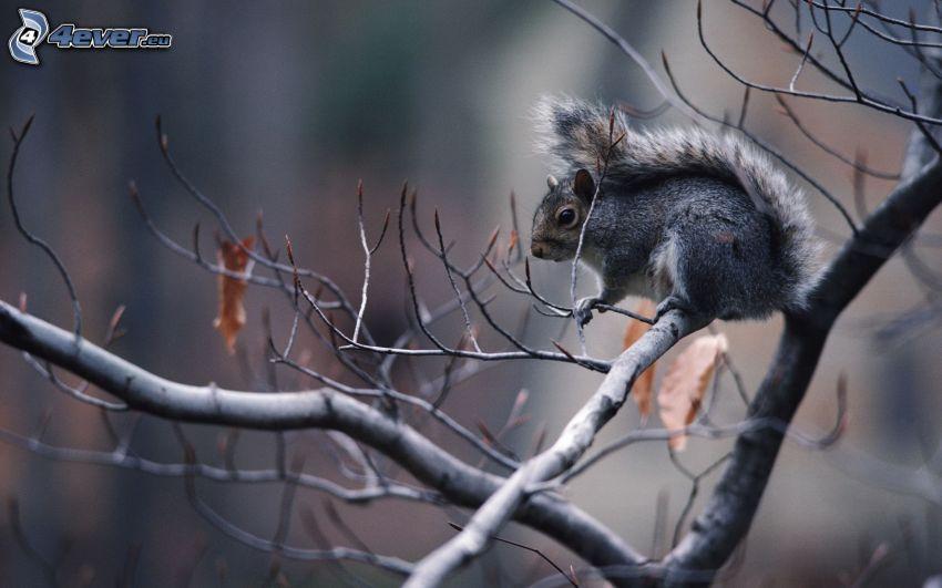 ardilla en un árbol