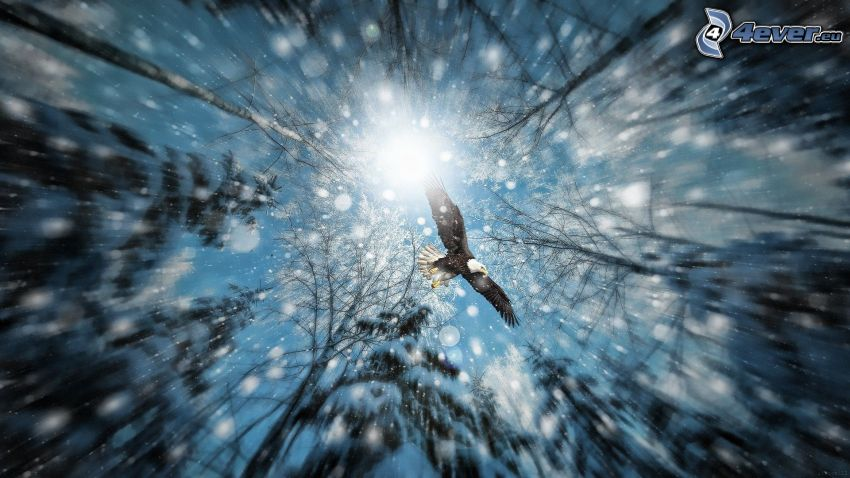 águila, nieve, sol, bosque