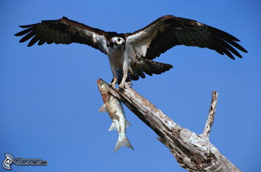 águila, pez, árbol seco