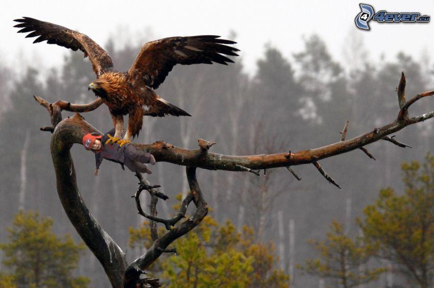 águila, rama, muñeca