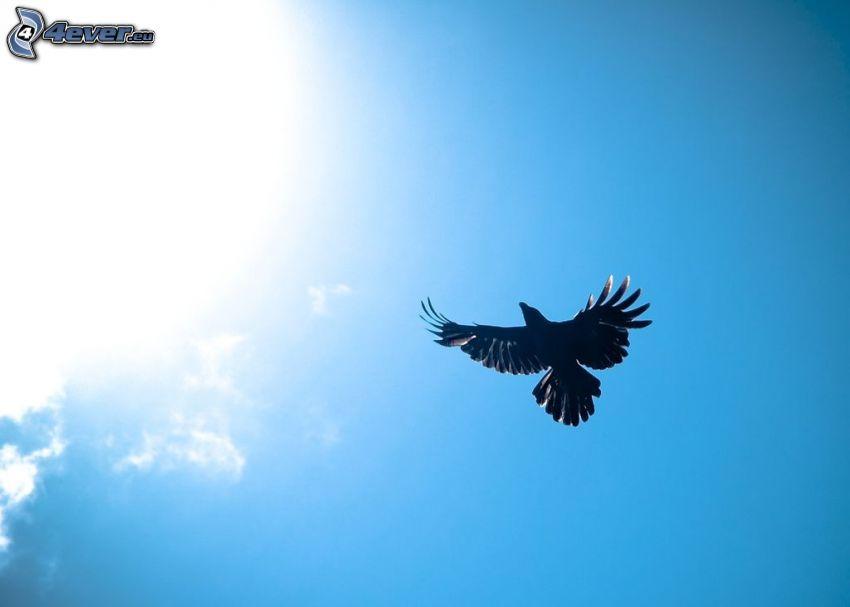 ave de rapiña, sol