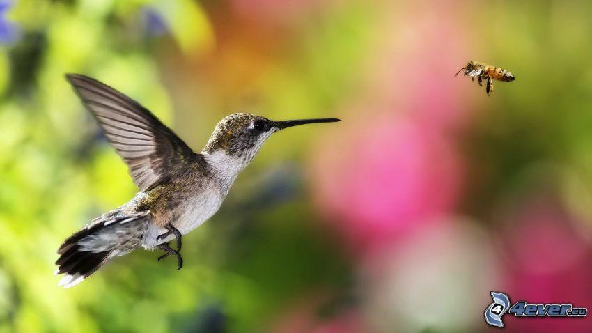 colibrí, abeja