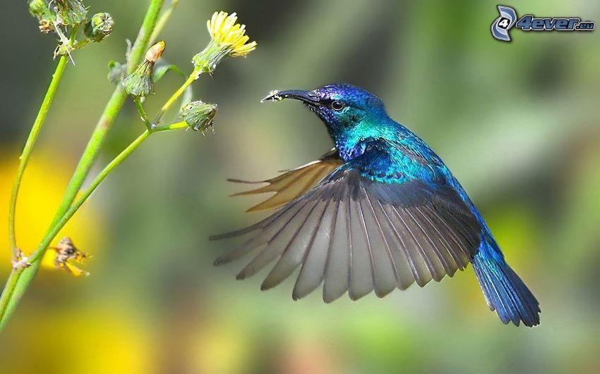 colibrí, flor amarilla