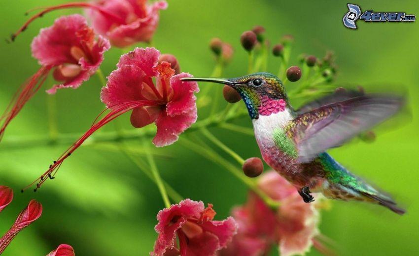 colibrí, flores de color rosa