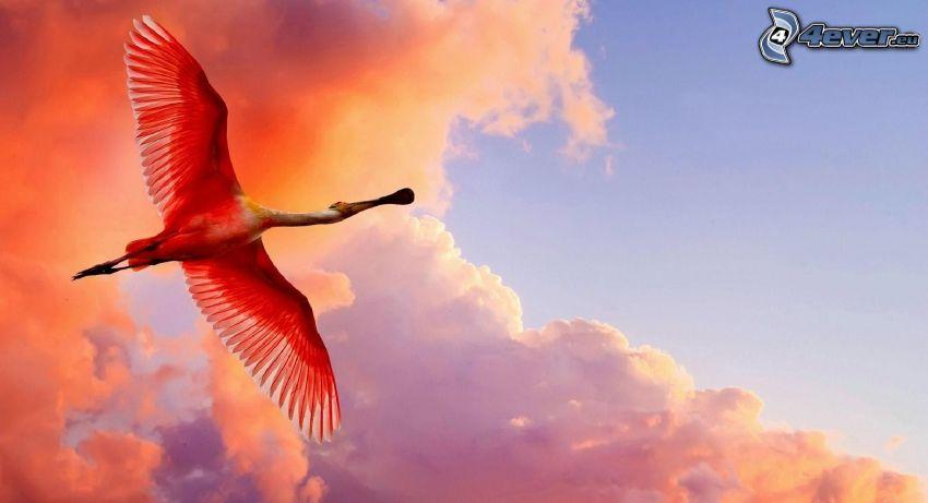 flamenco, vuelo, cielo de color rosa