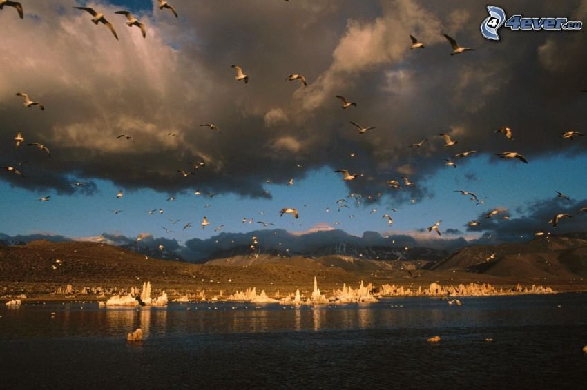 gaviotas, Mono Lake, nubes, sierra