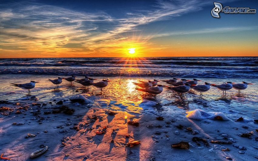 gaviotas, puesta de sol en el mar