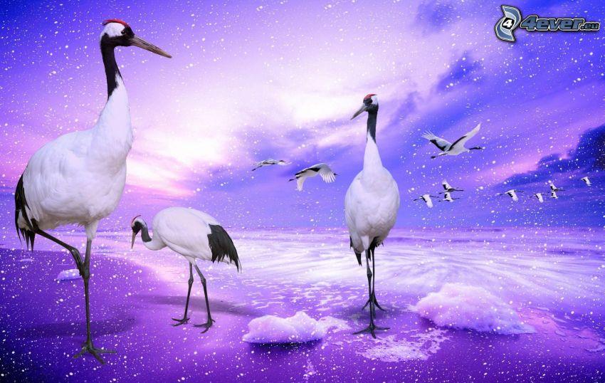 Grúas pájaro, nubes, vuelo