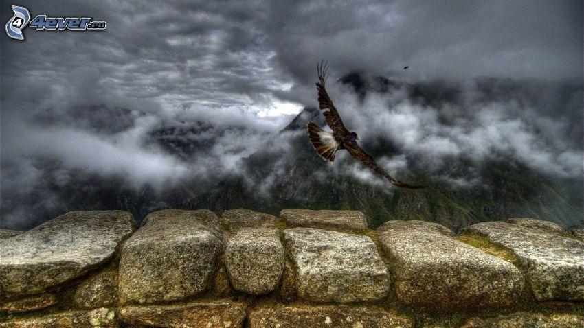 halcón, ave de rapiña, vuelo, nubes, montañas, HDR, muro de piedra