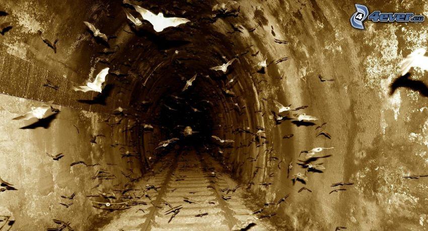 Murciélagos, túnel, carril