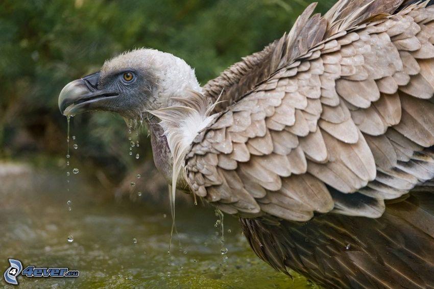 pájaro, agua