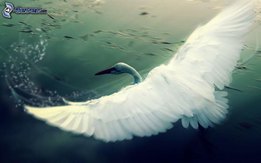 pájaro, alas, vuelo