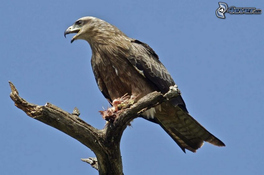 pájaro, árbol seco