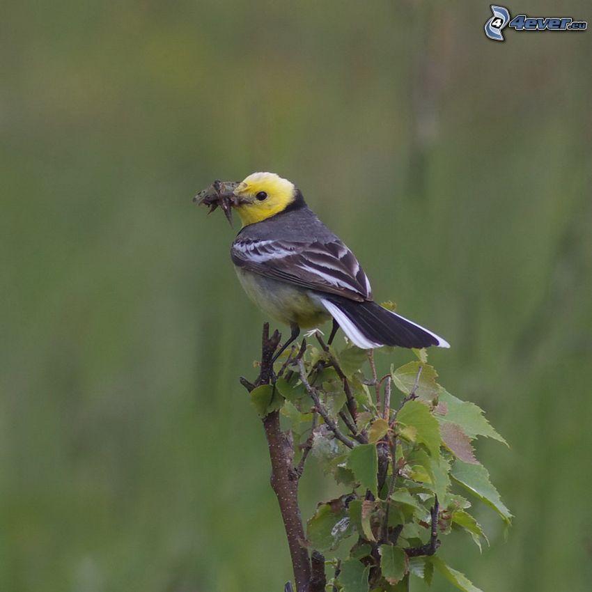 pájaro, arbusto