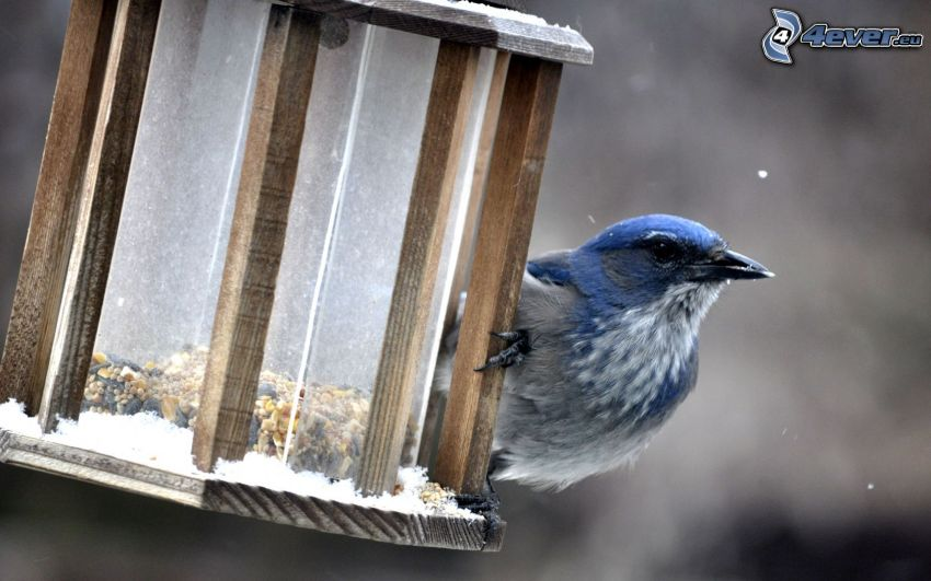 pájaro, casita para aves