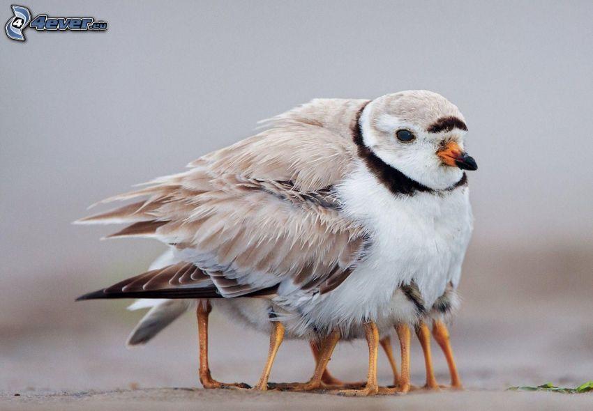 pájaro, crías, pies