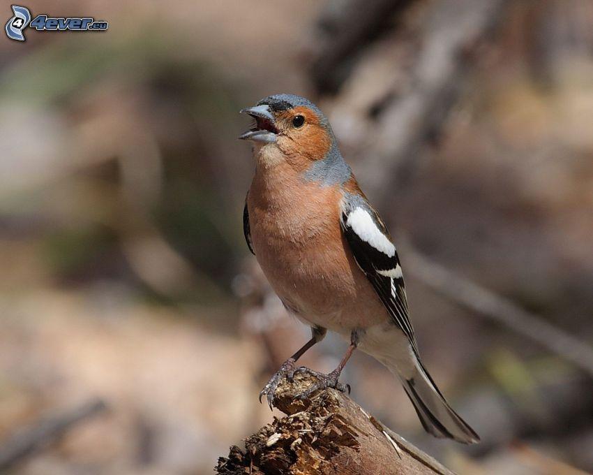 pájaro, madera