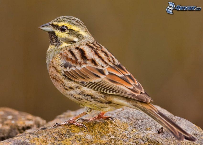 pájaro, piedra