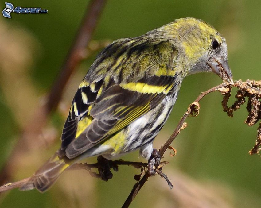 pájaro, planta