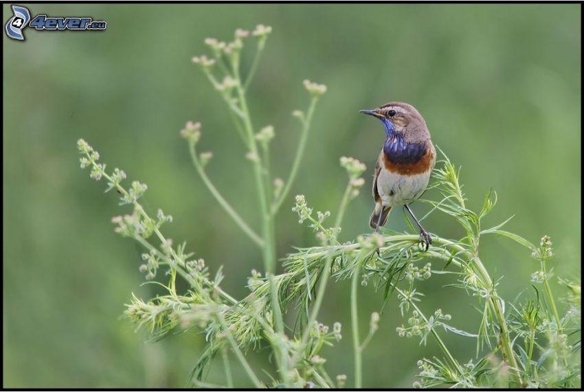 pájaro, plantas