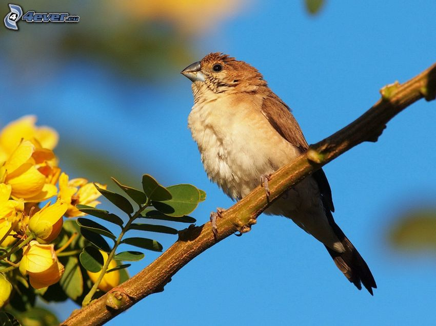 pájaro, ramita, flores amarillas
