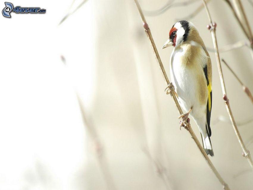pájaro, ramita