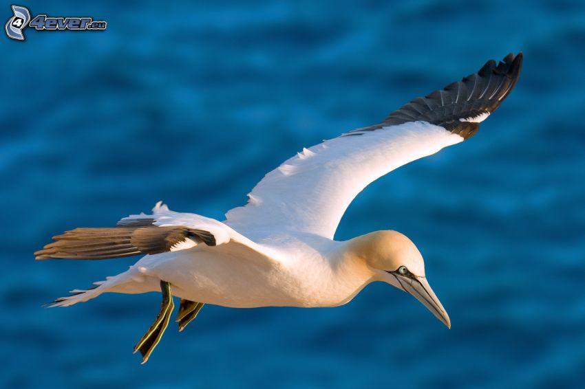 pájaro, vuelo