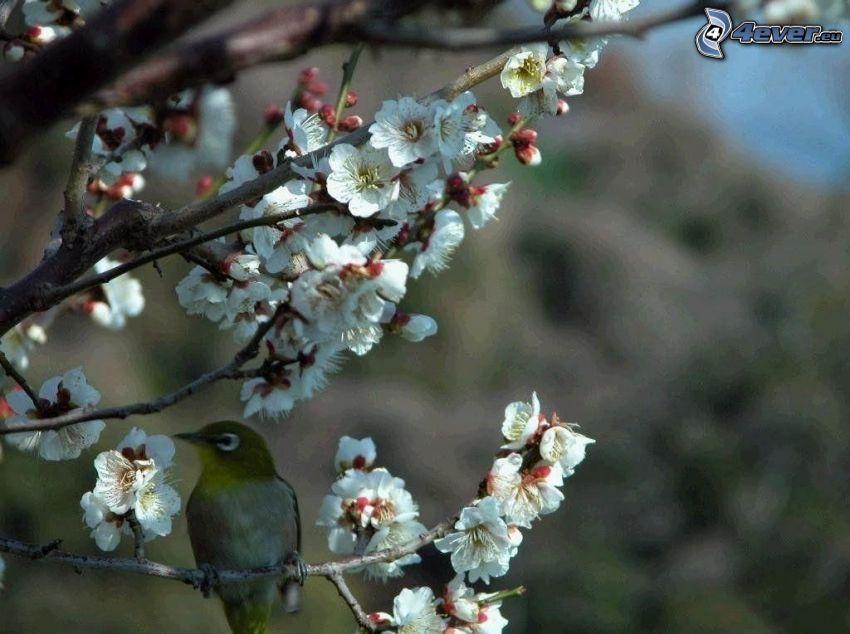 pájaro en una rama, rama en flor