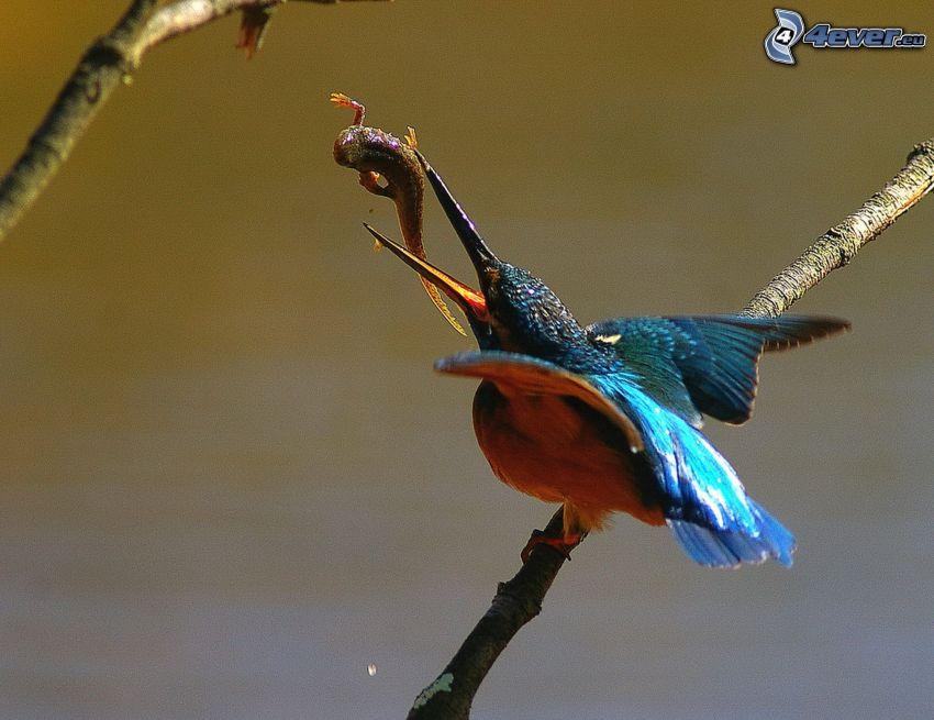 pájaro que pesca en agua, alimento, ramita