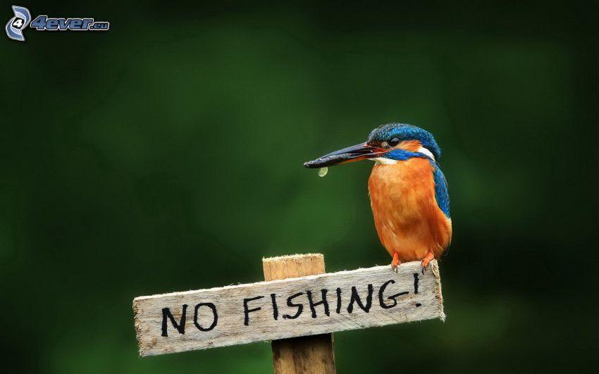 pájaro que pesca en agua, letrero