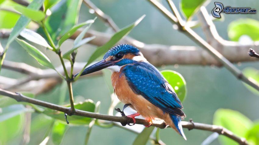 pájaro que pesca en agua, ramita
