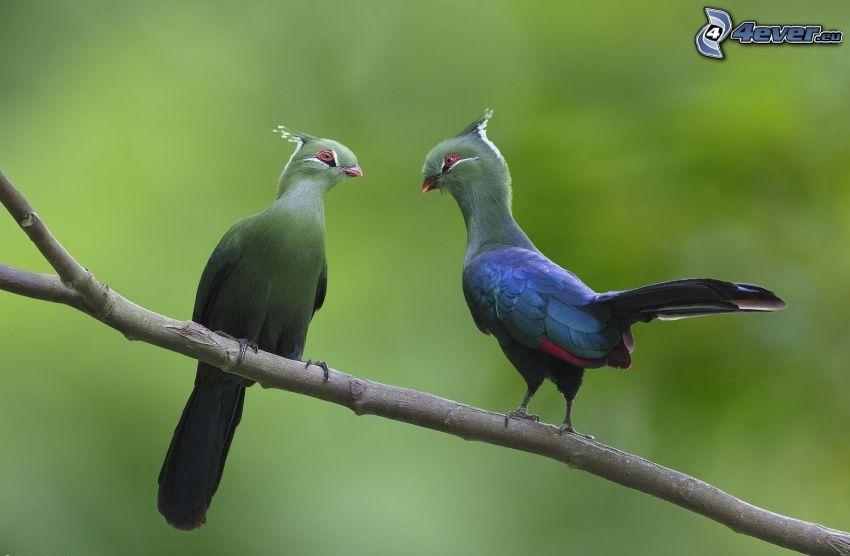 pájaros en una rama