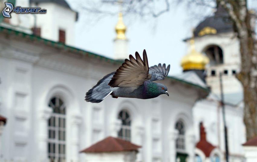 paloma, vuelo, edificio histórico