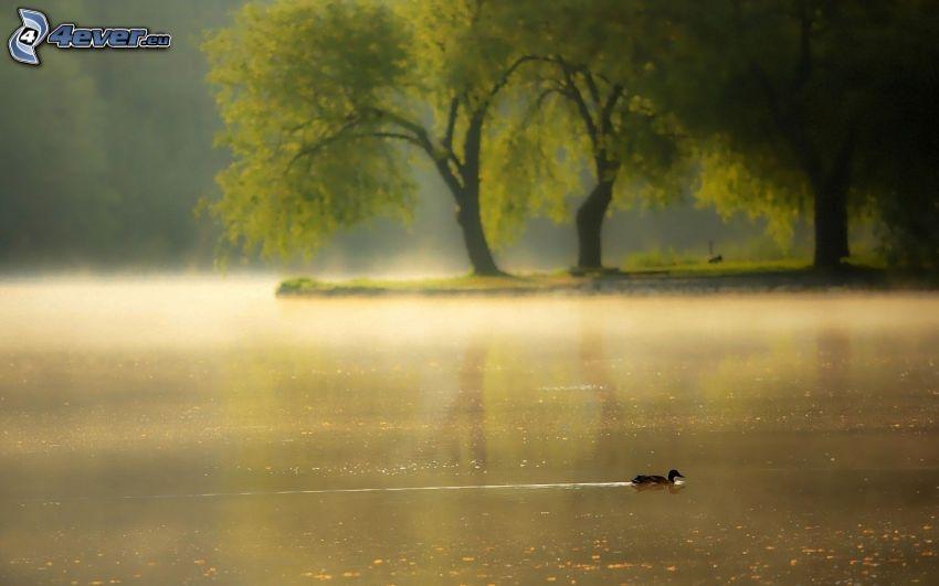 pato, lago