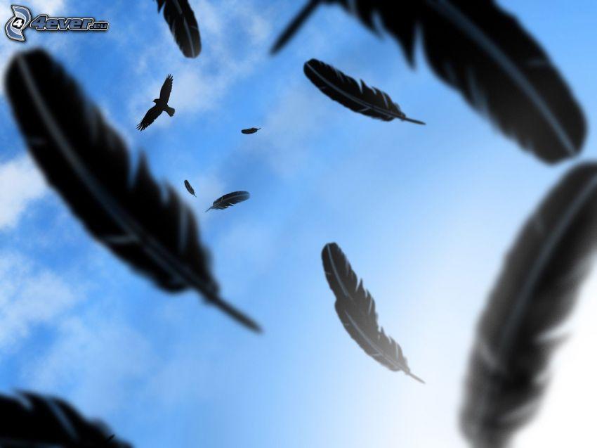 plumas, pájaro