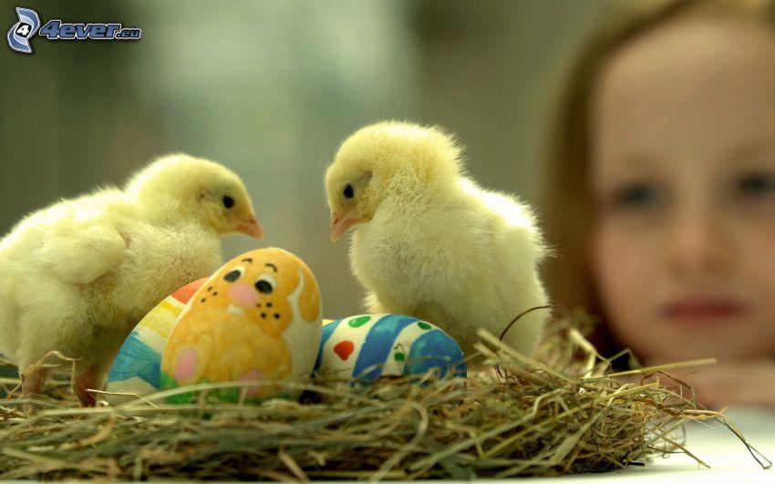 pollitos, huevos pintados, nido, chica