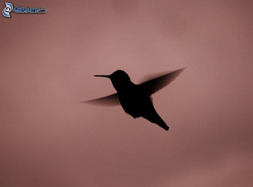 silueta del ave, colibrí, vuelo
