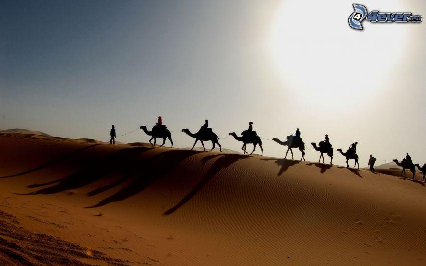 beduinos en camello, camellos, arena