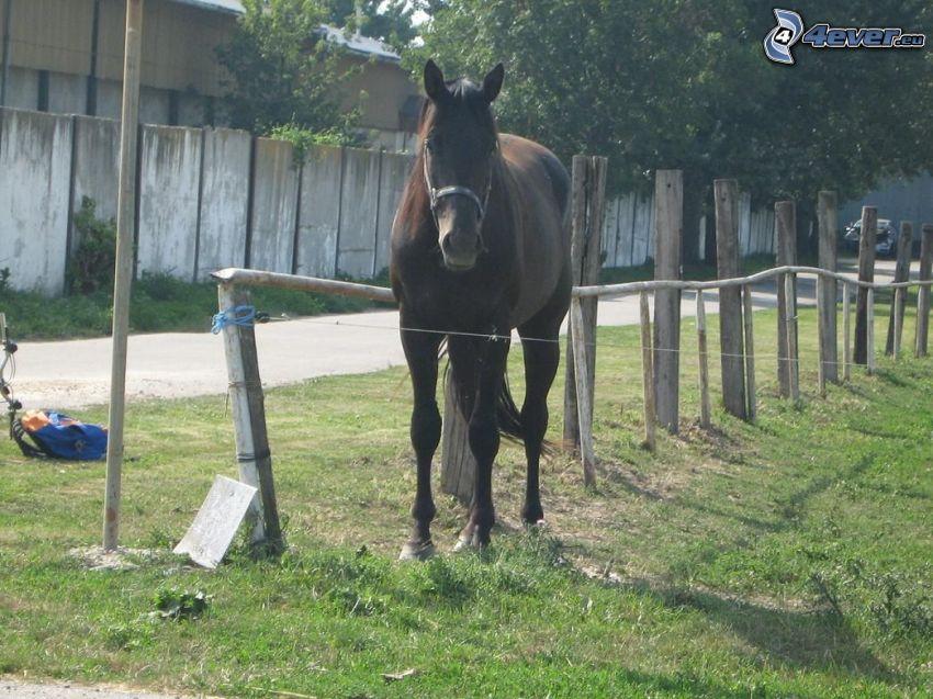caballo, animal