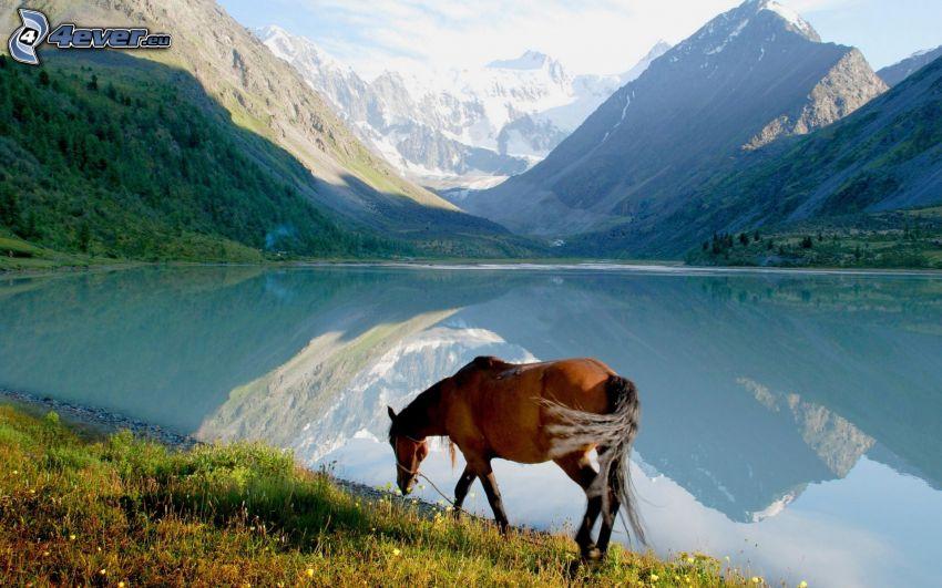caballo, lago, montañas nevadas