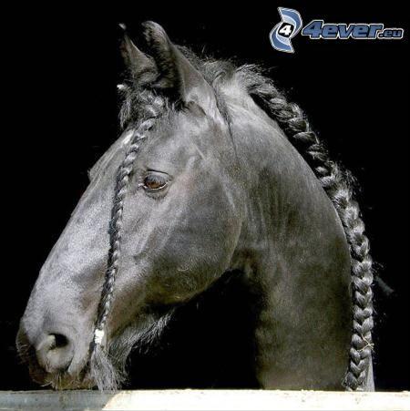 caballo, trenzas