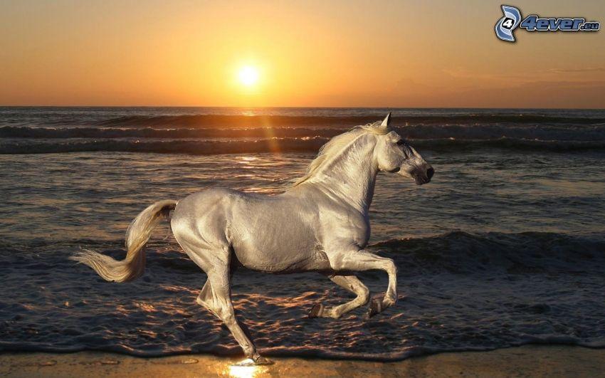 caballo blanco, carrera, playa al atardecer, puesta de sol sobre el mar