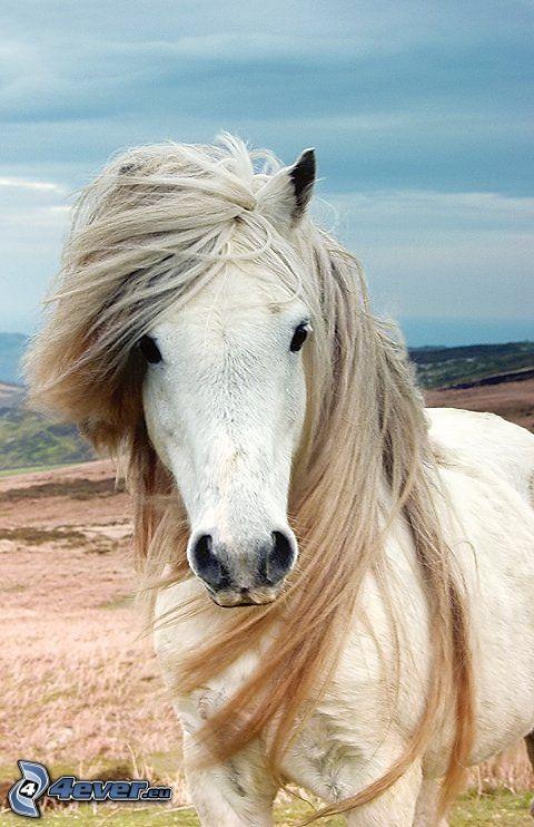 caballo blanco, melena, viento