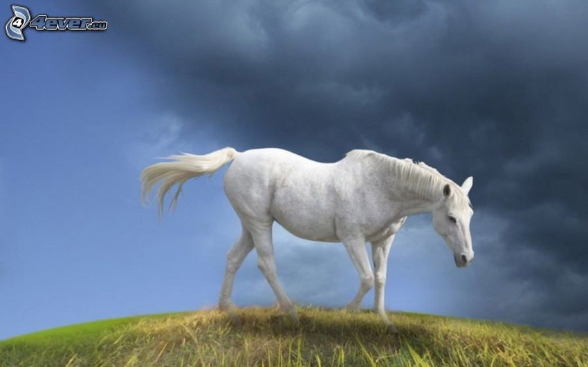 caballo blanco, nubes