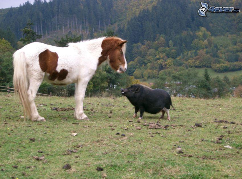 caballo de trabajo, verraco, cerdo, valla, bosque