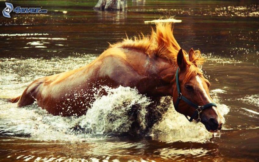 caballo marrón, agua, carrera
