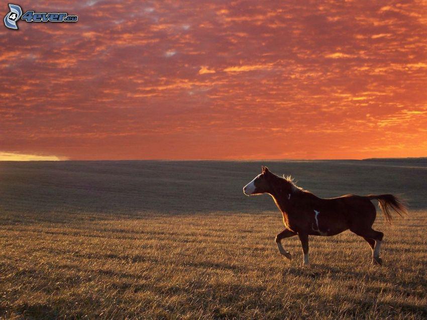 caballo marrón, campo, alba de noche
