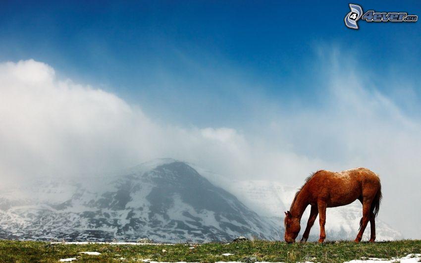 caballo marrón, colinas cubiertas de nieve