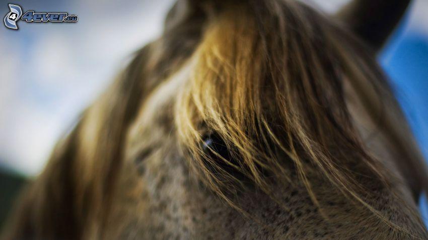 caballo marrón, melena